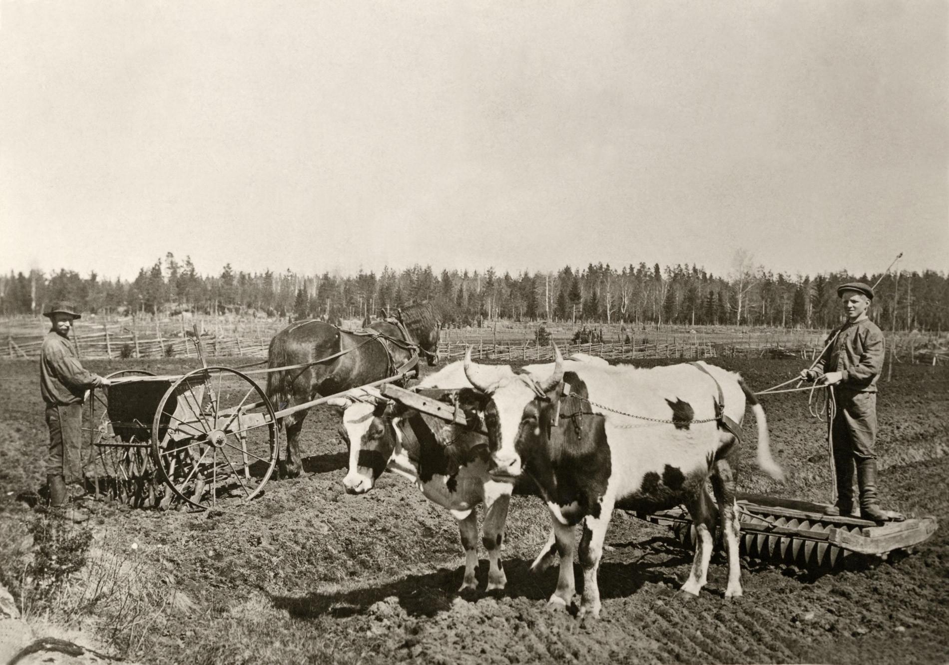jordbruk_n1_44632.jpg