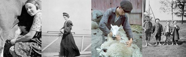 Bilder från Fotoskafferiet. Bild ett: kvinna som mjölkar en ko. Bild två: en kvinna på ett fartyg. Bild tre: en pojke som klipper ett får. Bild fyra: bild på fyra fattiga pojkar.