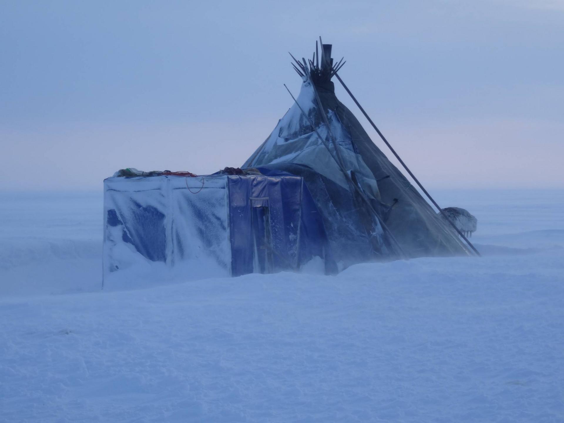 Tält i snöigt landskap. Foto: Dmitry Arzyutov