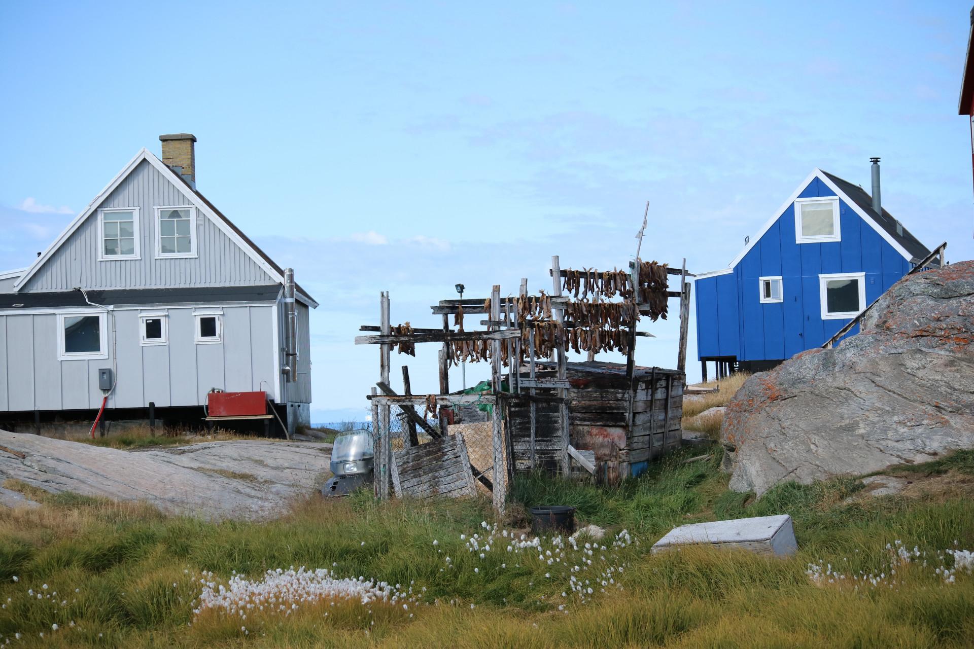Vitt och blått hus med gräs och små berg i förgrunden. En torkställning står mellan husen, där fisk hänger på tork. Bild från Grönland, foto av Nordiska museet.
