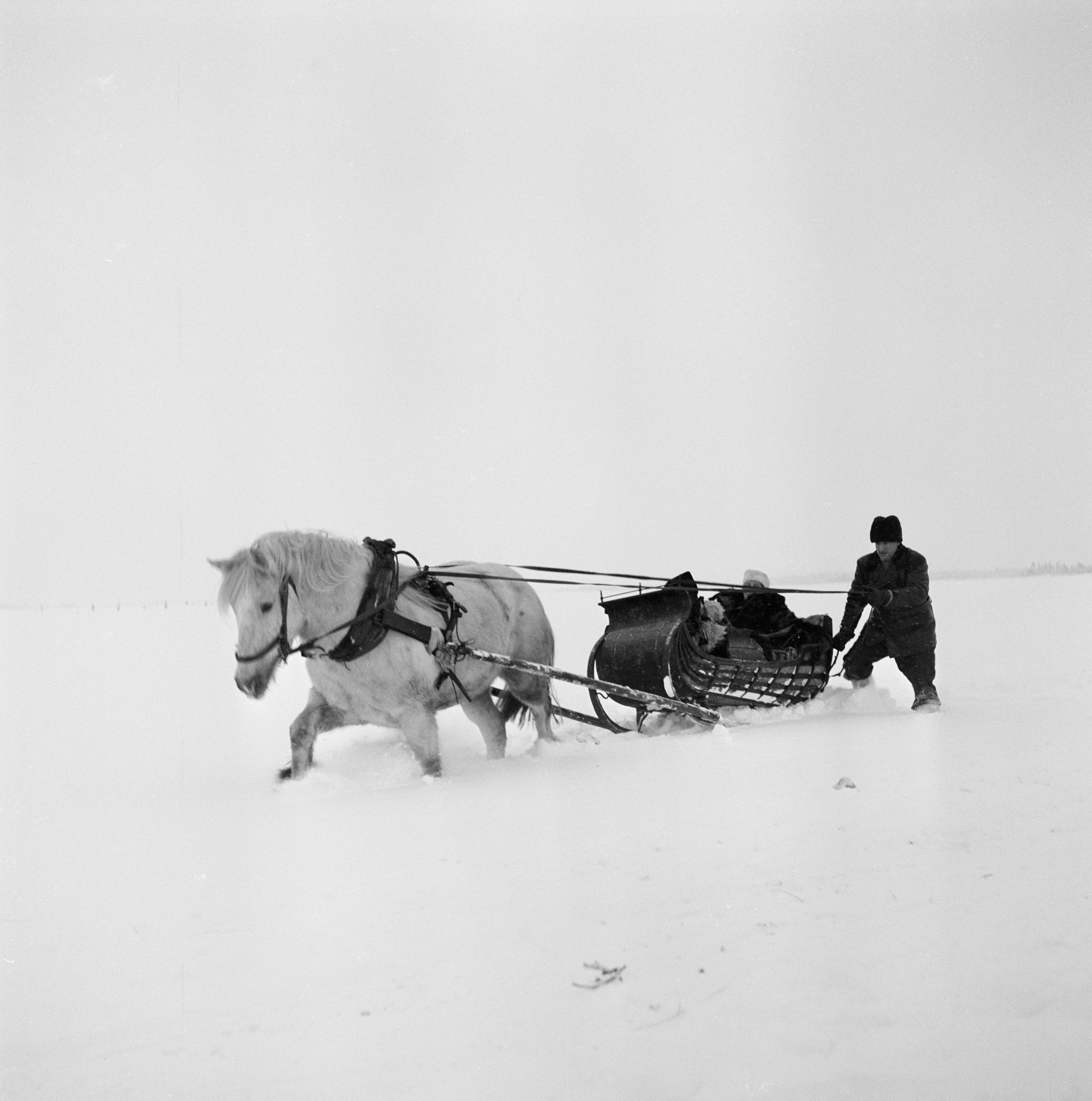 Picking up a midwife by sleigh, Arjeplog. 1950. Photo: KW Gullers/Nordiska museet
