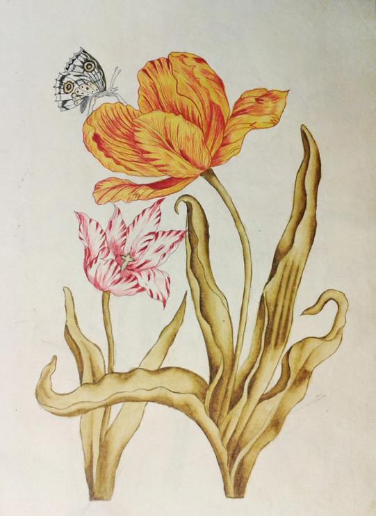 Sida ur teckningsbok från 1743 (Sara Worsters arkiv, Nordiska museet)