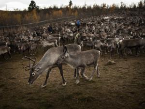 Foto: Camilla Andersen/ Nordiska museet